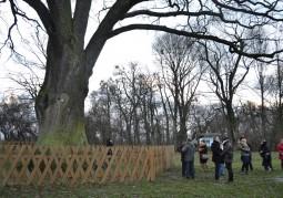 Войт гмины Руда-Хута Казимеж Смаль представляет участникам местную достопримечательность: тысячелетний дуб «Болько»
